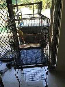 Near new bird cage only 6 months old Georges Hall Bankstown Area Preview