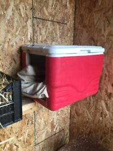 Looking for free old coolers to make cat houses