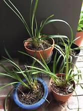 Orchids & Pots Deal St Kilda Port Phillip Preview