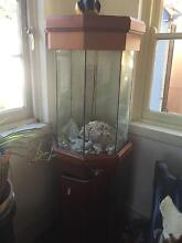 Fish tank quick sell Sans Souci Rockdale Area Preview