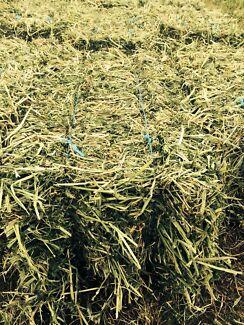 Lucerne/Barley mix hay Gatton Lockyer Valley Preview