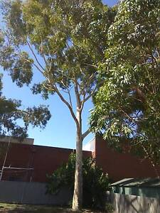 TREE for free, can use for firewood or cut use as building purpos Willetton Canning Area Preview