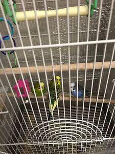 3 healthy birds