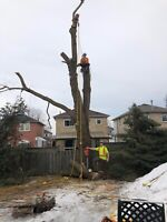 Professional Tree Removal and Trimming