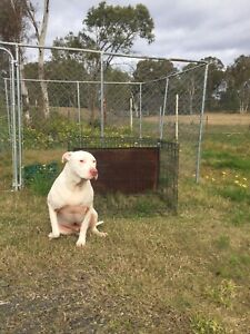 Dog Enclosure In Penrith Area Nsw Pet Products Gumtree