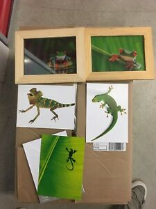 Petits cadres / affiches Grenouille