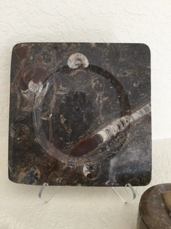 Hand Carved Fossil Plate or Tray ORTHOCERAS & Ammonite