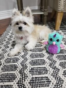 Missing dog in newmarket