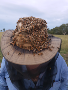 Beekeeping Lessons Toowoomba Toowoomba City Preview