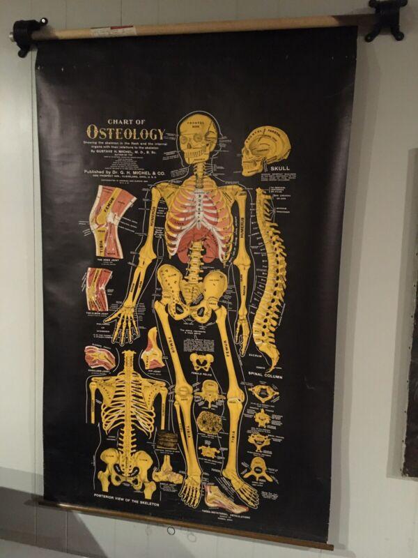 Antique Original Osteology Chart Bones 1920 Excellent Condition Michel & Co