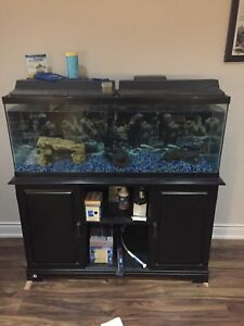 55 gallon fist tank and stand