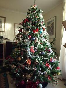 "CHRISTMAS TREE   198cm (6'5"") Condon Townsville Surrounds Preview"