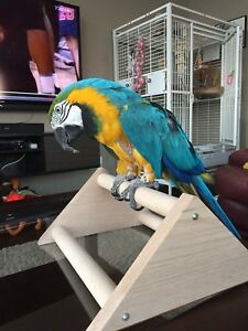 Maya the Blue and Gold Macaw - Looking for Information