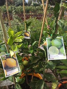 Quality Fruit Trees and Shrubs West Swan Swan Area Preview