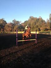 17hh OTTB gelding. ONLY TO EXPERIENCED RIDER OR TRAINER Iluka Clarence Valley Preview