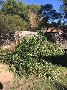 Wanted: Wanted green waste removal