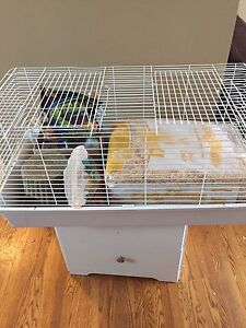 Guinea pig starter set