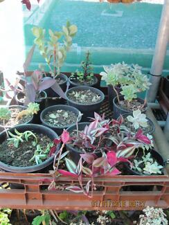 Succulent Plants Swap