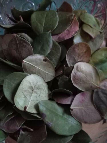 Wintergreen Leaves Organic Hand Harvested