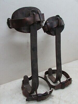 Vtg Pole Tree Climbing Spikes Gaffs Early M Klein Sons 15 12 Leather Lamb Pair