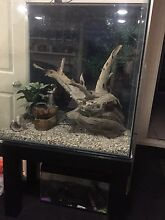 Reptile/Frog tank Greenwood Joondalup Area Preview