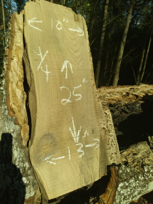 45 Years Logging TRUE Old Growth Ancient Sinker Cypress Craft Wood FREE SHIPPING