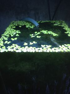 Moss & floating plants