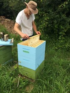 Host a beehive!