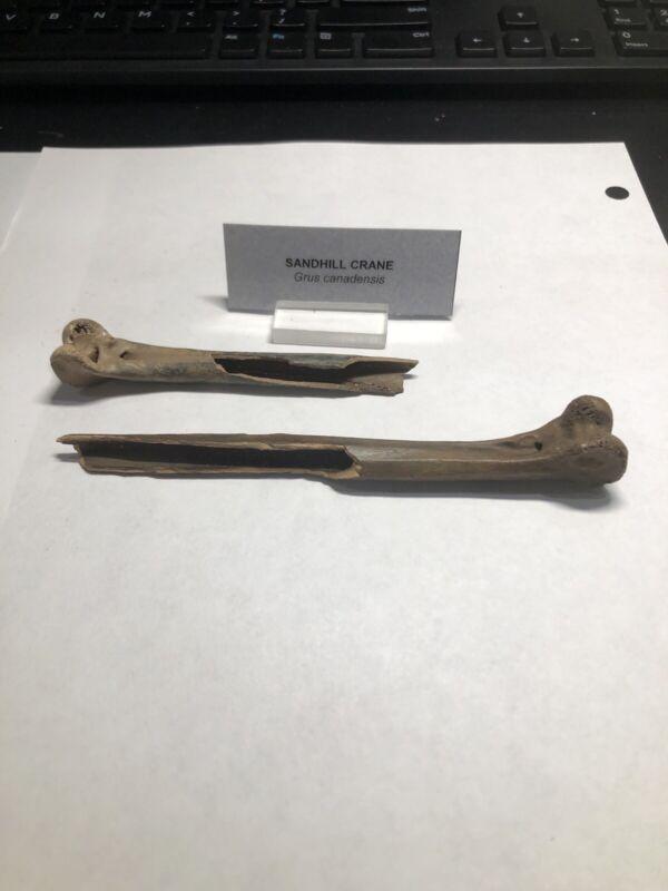 2 Pleistocene Fossil  Bird Sandhill Crane Leg Bones From Dixie Co. Florida