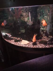 Aquarium and fish with all accessories. 120g tank.