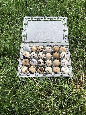 30 Quail Egg Cartons 24 Count Plastic From Myshire Farm. This Holds Jumbo Eggs