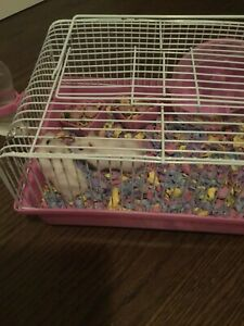 2 winter white dwarf hamster siblings for sale $15or best offer