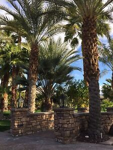 Luxury RV Resort in the Coachella Valley (Palm Springs,CA)