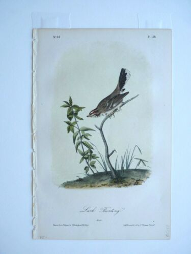 Lark Bunting Audubon Color Print 1850s Octavo Edition Plate #158 Antique