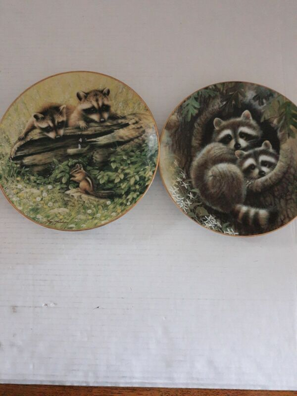 Raccoon Want To Playand Hollow HidWoodland Encounters Plate Hamilton Collection
