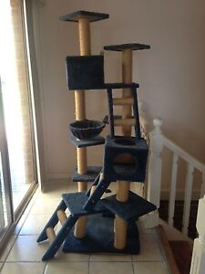 Deluxe Cat/Kitten Pole climber/scratcher 5 different levels Soldiers Point Port Stephens Area Preview