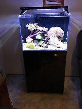Marine Aquarium - Complete setup Hazelbrook Blue Mountains Preview