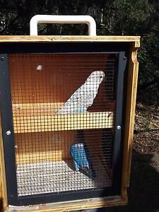 Love birds Wauchope Port Macquarie City Preview