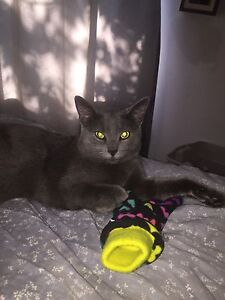 BEAUTIFUL 8 1/2 month old male cat
