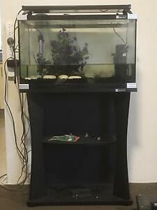 Fish Tank with Stand South Hurstville Kogarah Area Preview