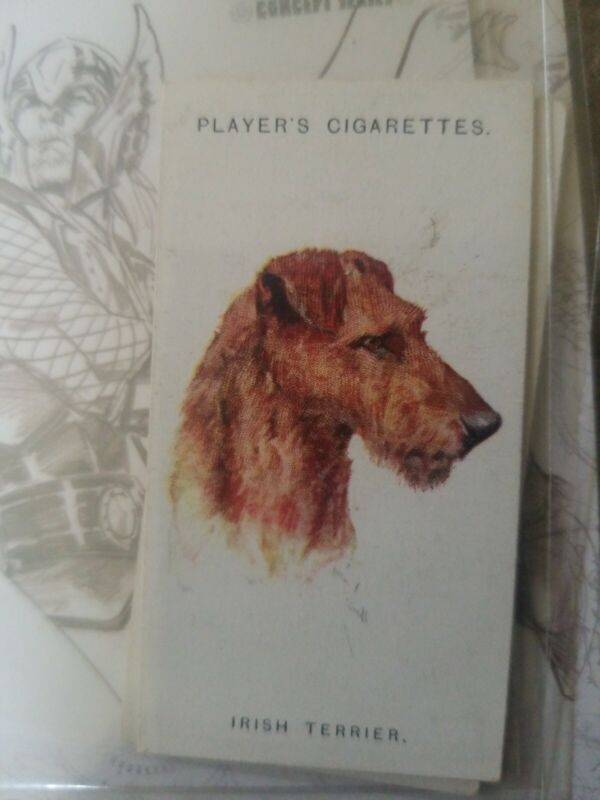 1929 Players Cigarettes Tobacco Dogs #43 Irish Terrier
