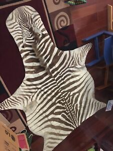 Zebra rug hide skin with black felt professionally tanned