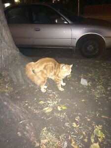 Cat found / spotted