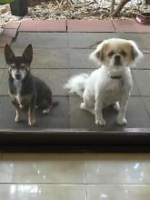 2 mature dogs Birkdale Redland Area Preview