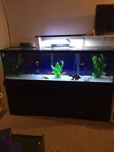 125 gallon 6' tank reduced $500 firm