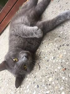 Kitty needs a home Broadmeadows Hume Area Preview