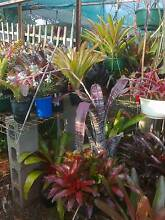 GARAGE SALE BUT PLANTS ONLY Toowoomba Toowoomba City Preview