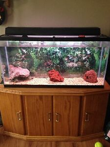 35 gallon fish tank