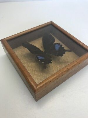 Powellcraft Framed Butterfly, Made In Cornwall