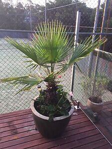Palm & Pot South Hurstville Kogarah Area Preview